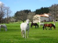 horses-localarea